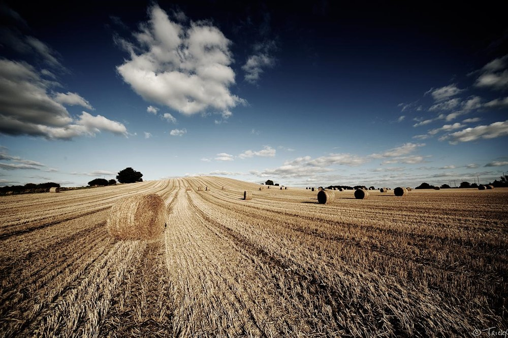 Agriculture looks set to remain the biggest user of water into the middle of this century.
